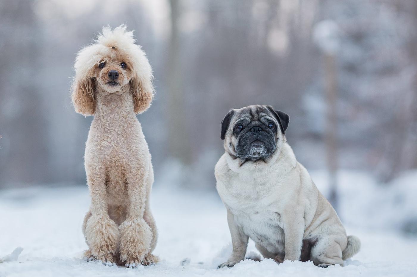 Die Bürohunde Wilma und Arnold. (Foto: Katrin Spanke/Forest Finance Service GmbH)